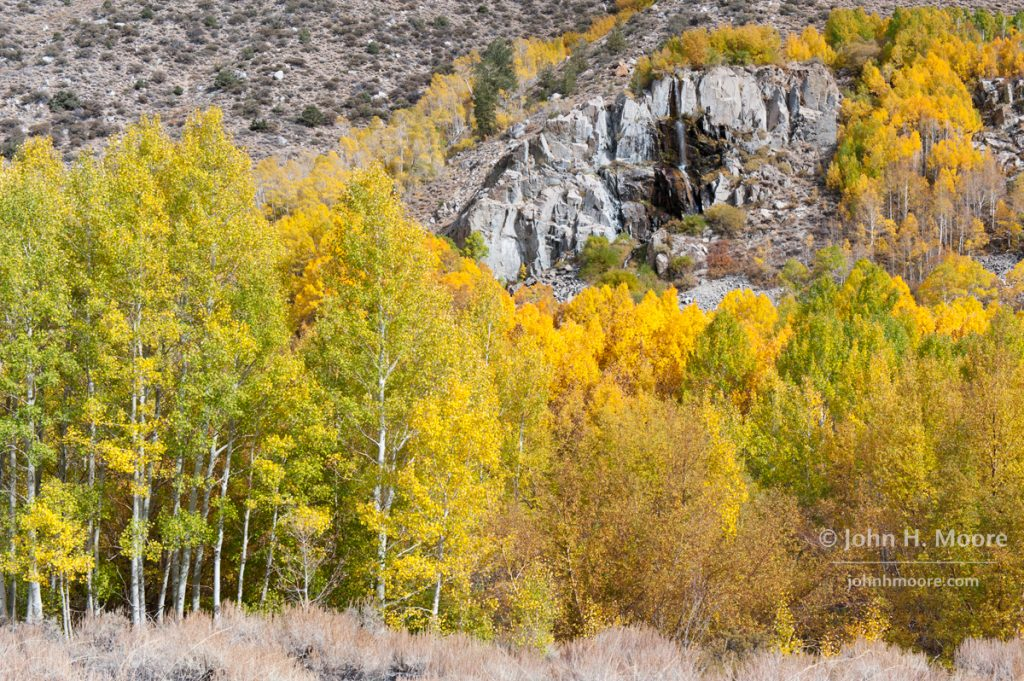 Grove of aspens in different stages of color around a waterfall on the South Fork of Bishop Creek.