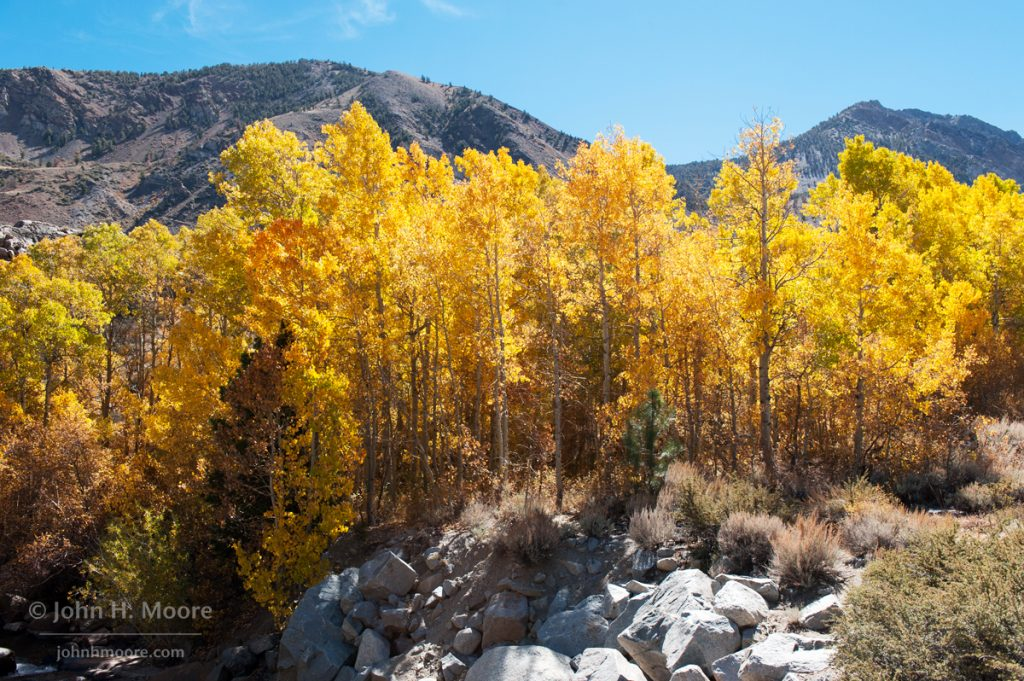 Aspens turn color along Bishop Creek.