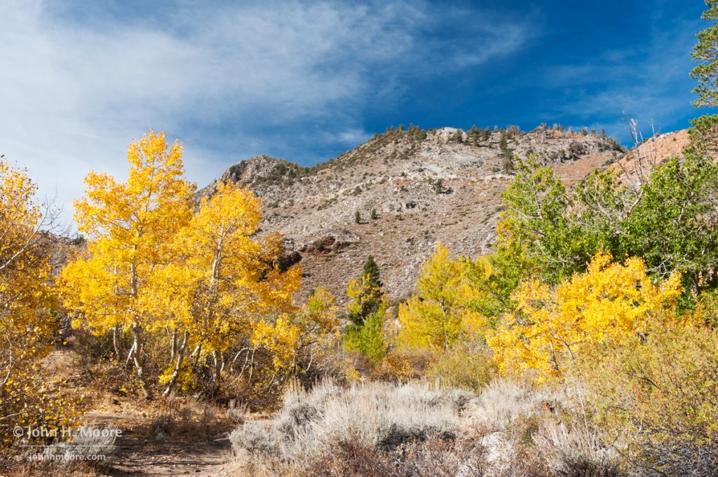 Fall color in the Eastern Sierra near Aspendell.
