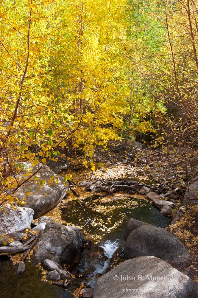 Fall leaves swirl in a small pool in a creek near Aspendell.