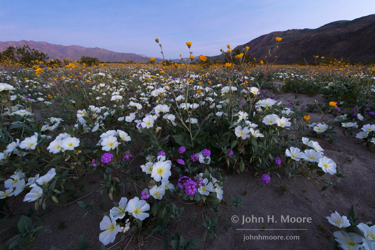 Anza Borrego Henderson Canyon John H Moore Photography